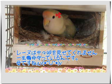 レーヌの巣箱ブログ用