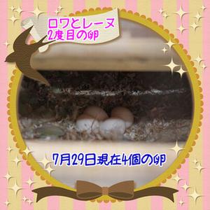 ロワレーヌ4個の卵ブログ用