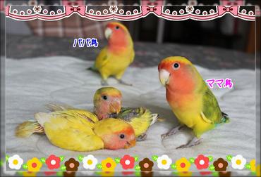 鳥の親子ブログ用