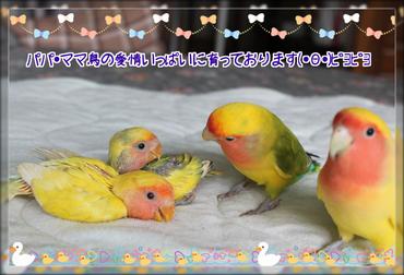 鳥の親子2ブログ用