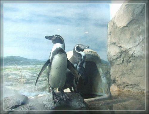 ペンギン1ブログ用