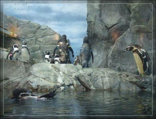 ペンギン2ブログ用