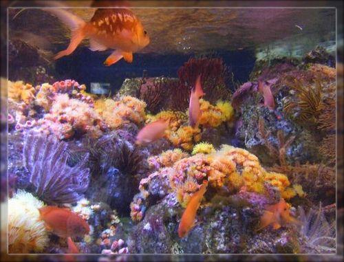 魚1ブログ用