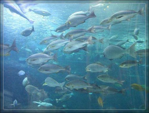 魚2ブログ用
