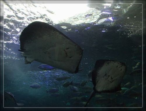 魚3ブログ用