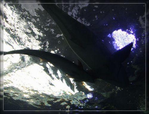 魚4ブログ用