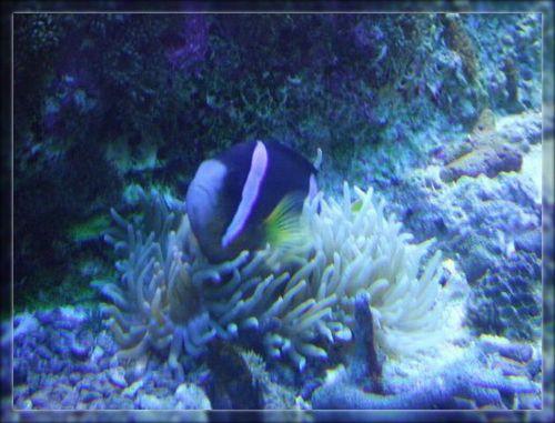 魚5ブログ用