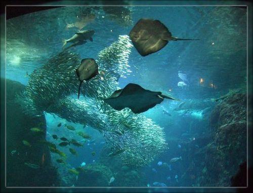 魚6ブログ用