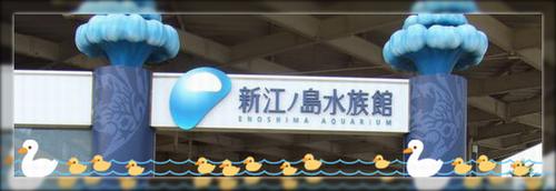 新江ノ島水族館ブログ用