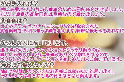 小桜インコの豆知識2