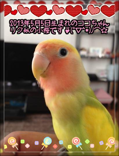小桜ココちゃん