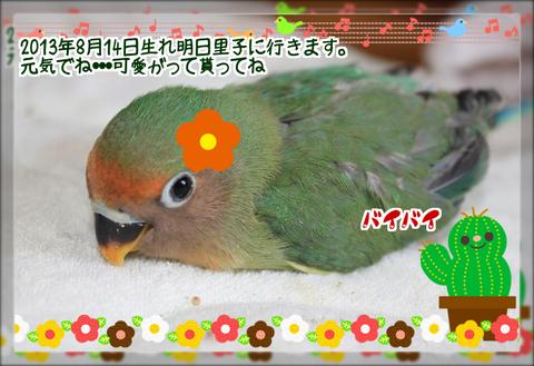 八重桜1羽目里子にブログ用