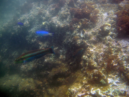 snorkeling6.jpg