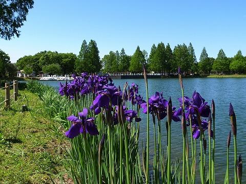 2013-05-02 川越水上公園 005