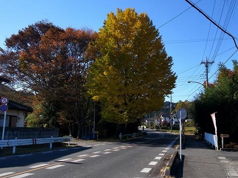 2014-11-19 鎌北湖 004