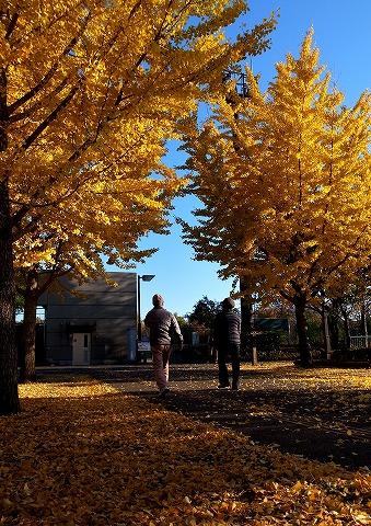 2014-11-19 鶴ヶ島市運動公園 027