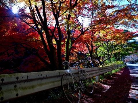 2014-11-19 鎌北湖 037