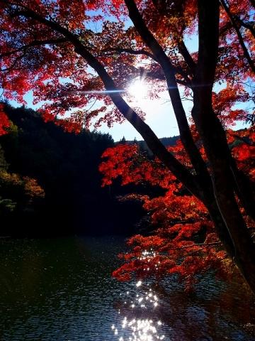 2014-11-19 鎌北湖 014