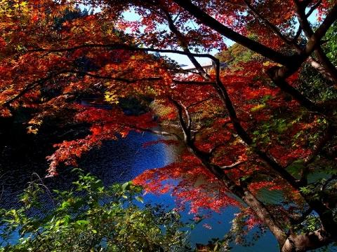 2014-11-19 鎌北湖 010