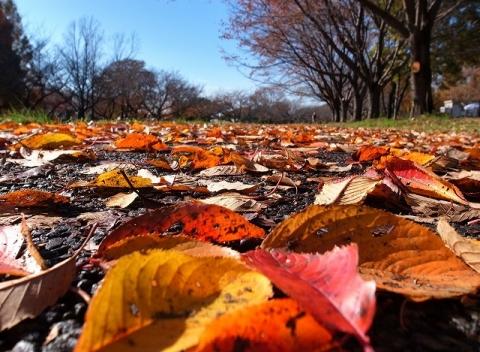 2014-11-27 川越水上公園 011
