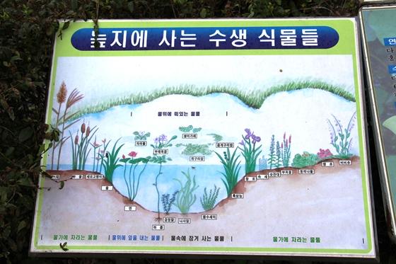 130912kunnamji (10)