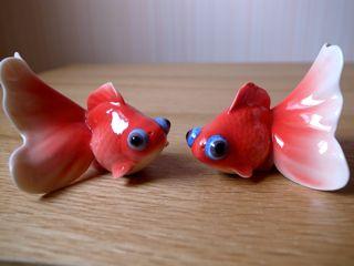 台北 金魚