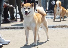 224amazakura2_20130729124128.jpg