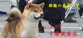 fuukun_bn_yasukaze_20130716230351.jpg