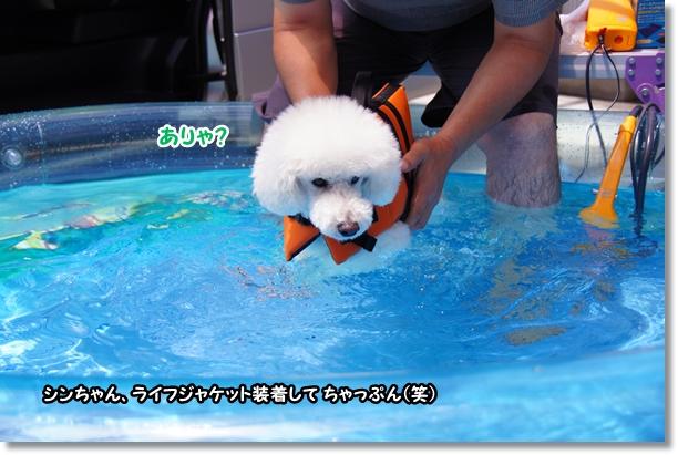プール再び(笑)4