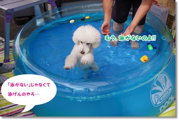 プール再び(笑)8