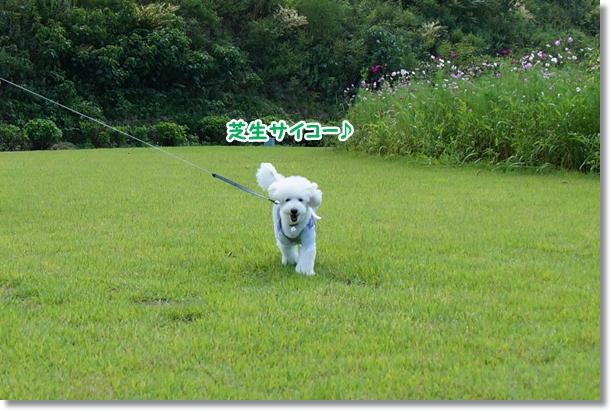 芝生でダッシュ♪5