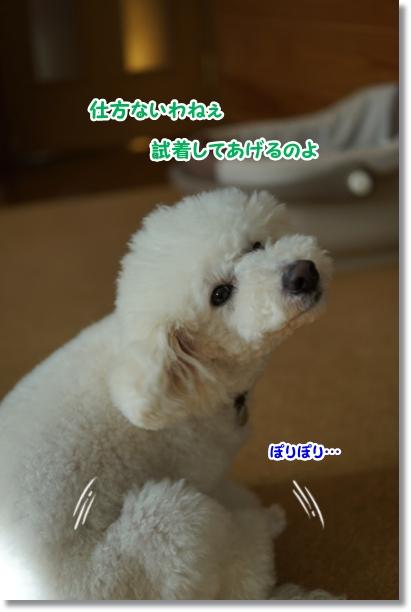 修行(^_^;)2