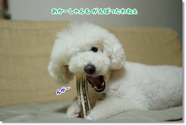 がんばるねぇ(笑)5