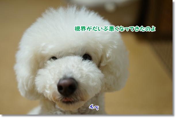 モッサリ(^_^;)2