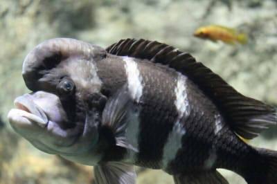 ぎょギョ魚