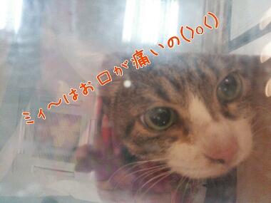 fc2_2014-01-18_23-05-30-238.jpg