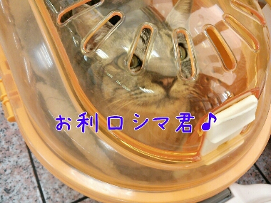 fc2_2014-01-18_23-05-55-303.jpg