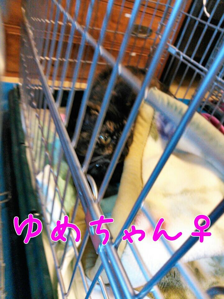 fc2_2014-01-28_14-54-42-389.jpg