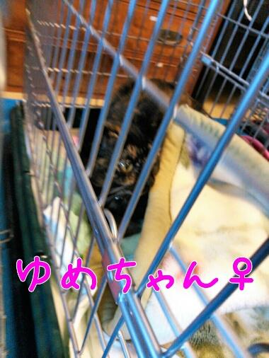 fc2_2014-01-29_15-18-52-604.jpg
