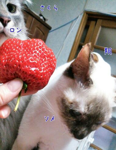 fc2_2014-01-31_13-29-05-796.jpg