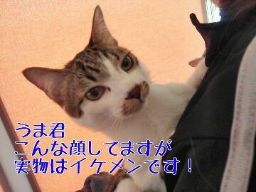 fc2_2014-02-10_16-28-23-935.jpg