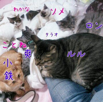 fc2_2014-02-11_21-42-42-614.jpg