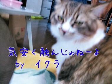 fc2_2014-02-17_16-18-00-949.jpg