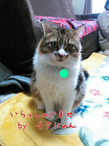 fc2_2014-02-18_11-57-43-197.jpg