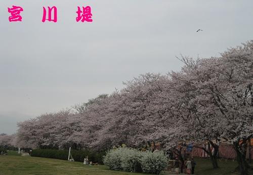 20130331-1.jpg