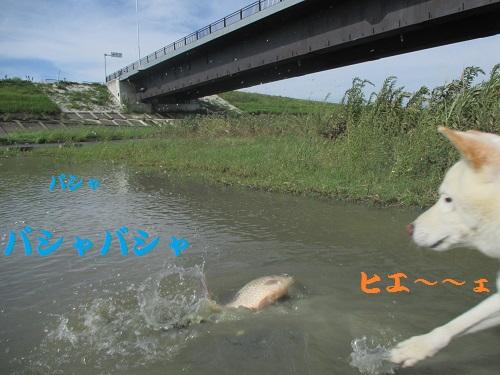 20130916-9.jpg