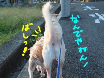 DSCF7594.jpg