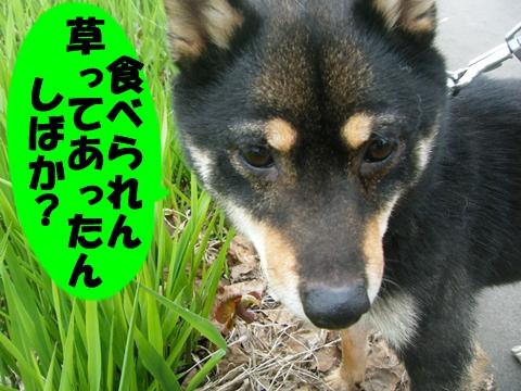 20130514-040.jpg