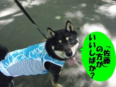 20130611-010.jpg