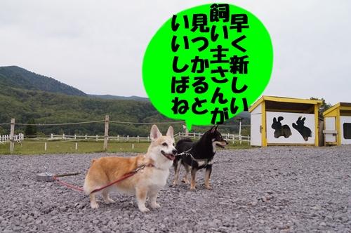 20130711-001.jpg